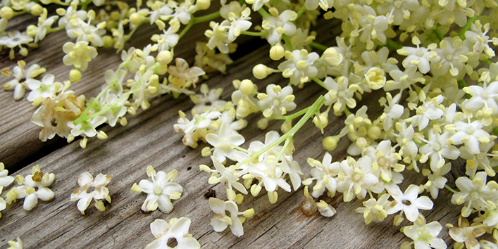 Elderflower-Oil