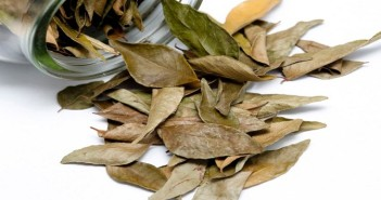 Have You Ever Used Bay Leaf (Tejpatta) For Hair And Skin?