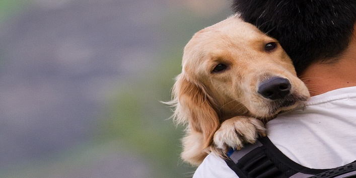 6-lessons-you-can-learn-from-your-pet-dog3