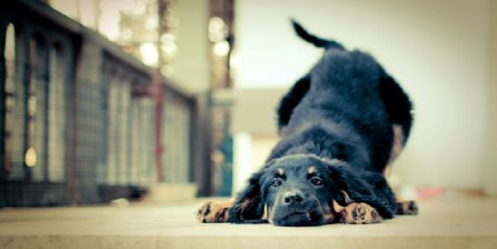 6-lessons-you-can-learn-from-your-pet-dog6