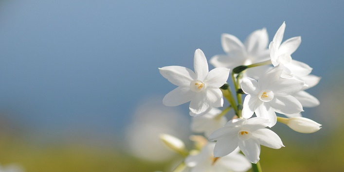 magical-flowers7
