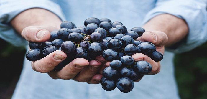 Make Grapes Your New BFF This Summer, Here's Why?
