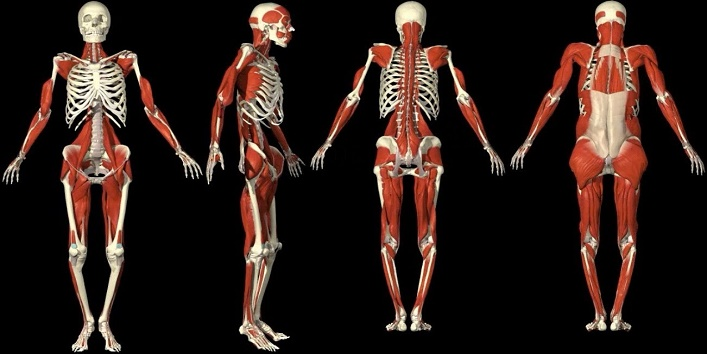 8-Shockingly-Amazing-Facts-About-Human-Body-cover