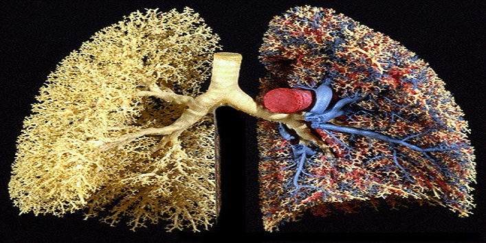 Surface-area-of-your-lungs