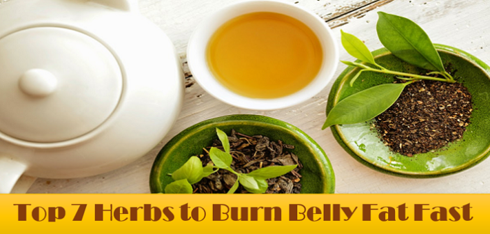 Lose Belly Fat: Top 7 Herbs to Burn Belly Fat Fast